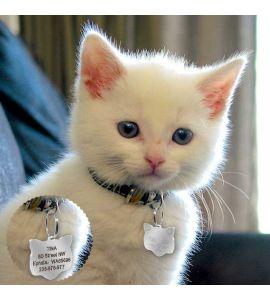 Mignon petit chat avec médaille