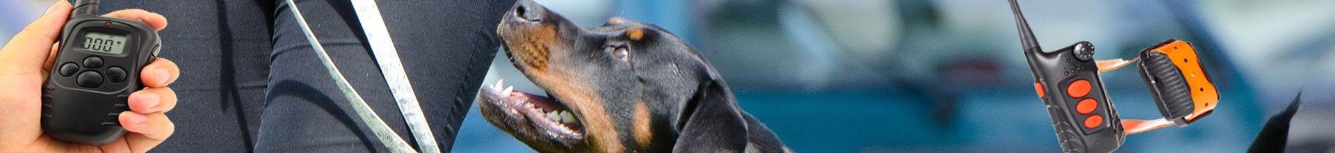 Training Halsband für die Hundeerziehung.