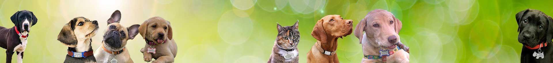 Médaille chien gravée personnalisée pour chien, chat, furet
