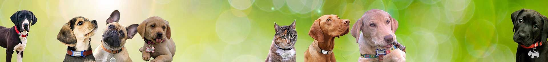 Médaille pour chat